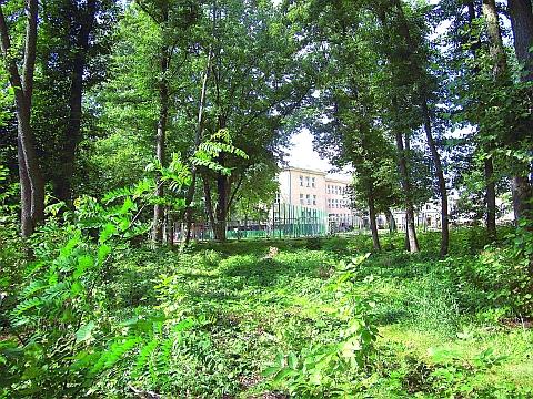 Galeria Modli�ska czy park w Wi�niewie?