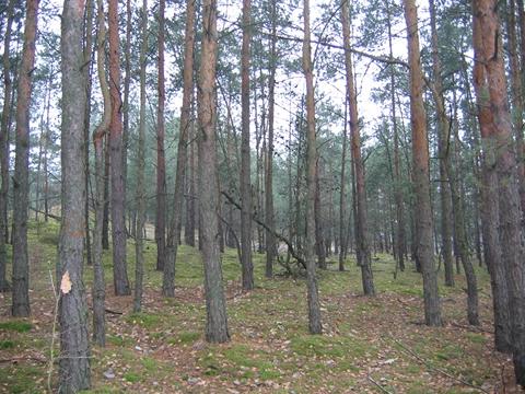 Zmieñmy razem bia³o³êckie lasy