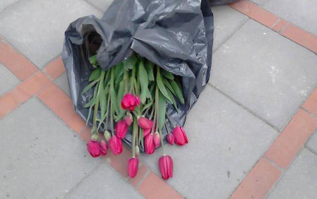 Wszyscy lubi± tulipany! Z³odziej ogo³oci³ rabaty pod ratuszem