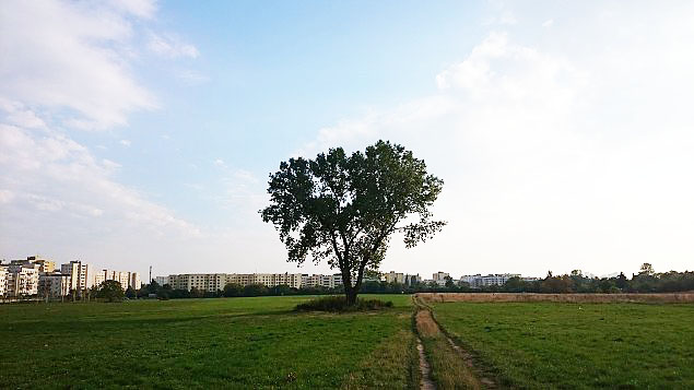 """Tysi±ce mieszkañ na polu dawnego PGR. Zniknie """"kultowe"""" drzewo"""