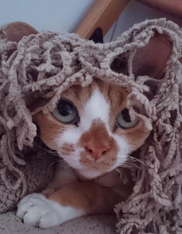 TOP 20 najzabawniejszych kotów. Rozwi±zanie konkursu