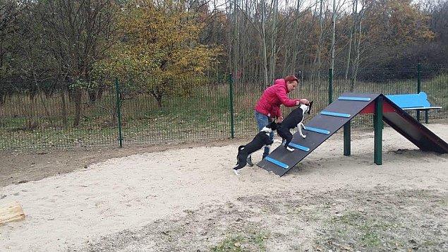 """Psy z Bielan maj± swój park rozrywki. """"Jeden ju¿ jest, a bêd± trzy"""""""