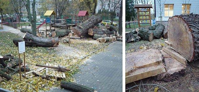 Wycinka starych drzew w szkole na Bielanach. Dzieci protestuj±