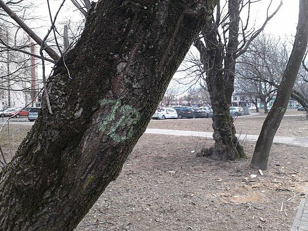 Kolejna wycinka starych drzew. Tym razem na Kwitn±cej