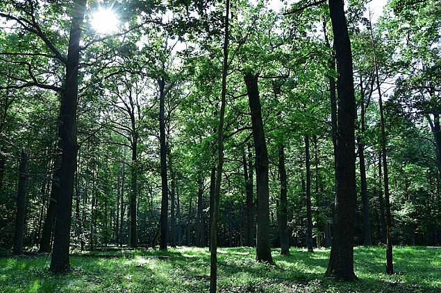Zakaz wstêpu do rezerwatu w Wawrze. Od ponad 60 lat