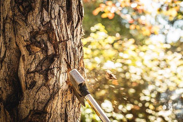 """""""Moje drzewo, moja sprawa. Szyszko, wr��! [LIST]"""