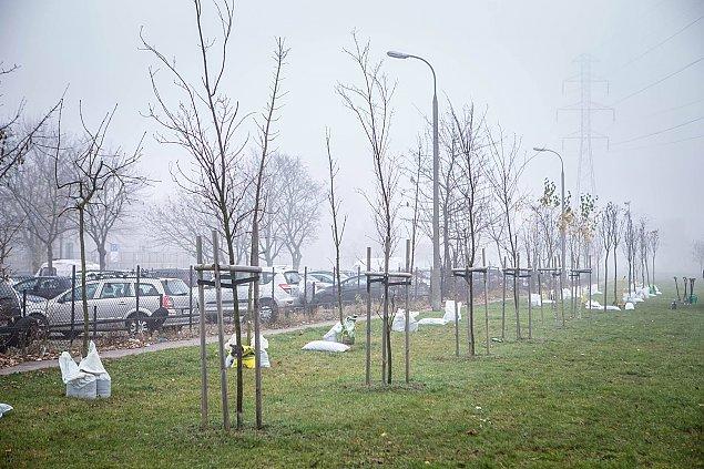 Du¿o nowo¶ci w parku Górczewska. Na pocz±tek... drzewa