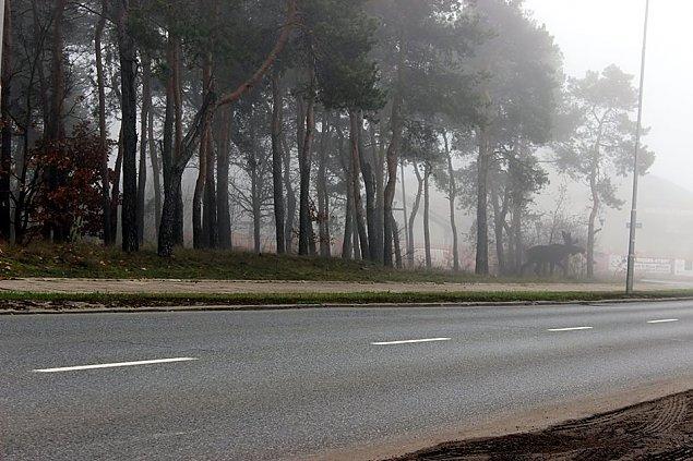 �o� w lesie - straszy czy u�wiadamia? Zatrwa�aj�ce statystyki