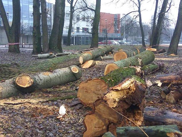 """Wyci�li drzewa w parku Picassa. """"Nie mieli�my wyboru"""""""