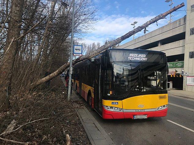 Drzewo spad�o na autobus