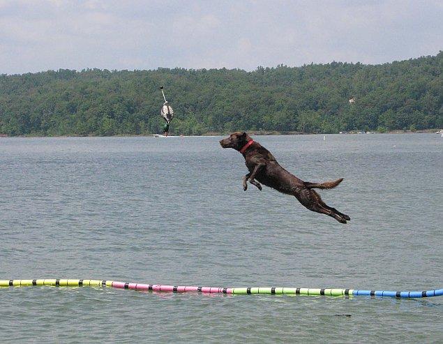 Psi sport. Mistrzostwa Polski w Nadarzynie