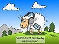 Moje owce