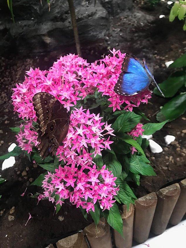 Motyle zapraszaj�. Jedyne takie miejsce w Warszawie