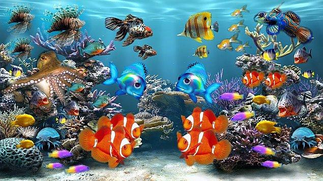 Urz�dzamy pierwsze akwarium!