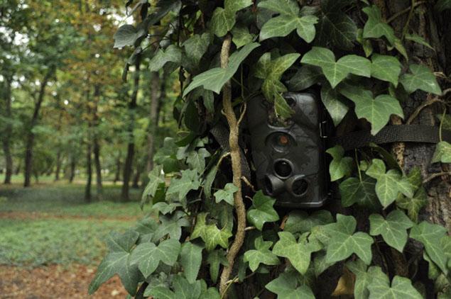 Kamery w lasach. Najlepszy bat na �mieciarzy?