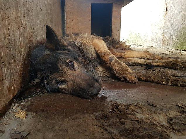 """Obro�cy zwierz�t: """"Pies umiera�, w�a�ciciel nie reagowa�"""""""