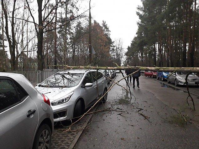 O krok od tragedii przy szkole. Drzewo run�o na samochody
