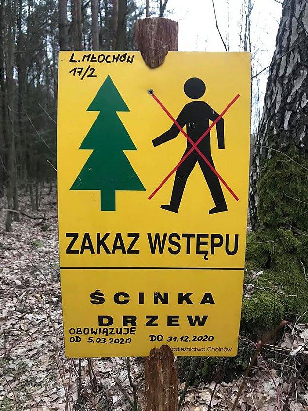 Tn± hektary Lasu M³ochowskiego. Zakaz wstêpu dla ludzi