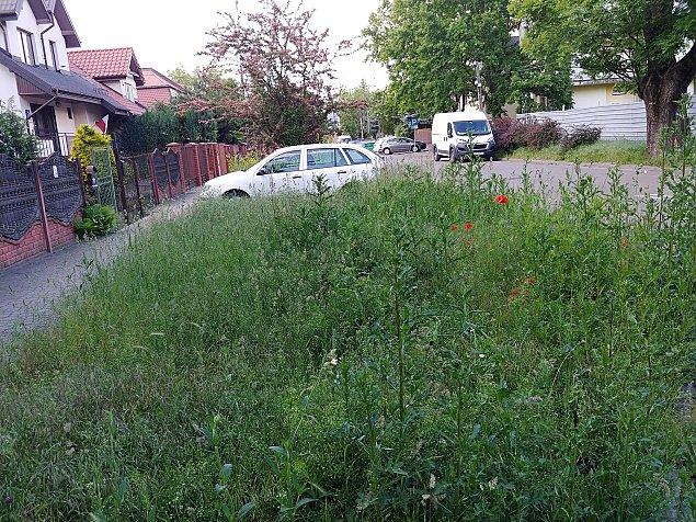 """Wola m�wi """"nie"""" koszeniu trawnik�w. Alergicy oburzeni"""