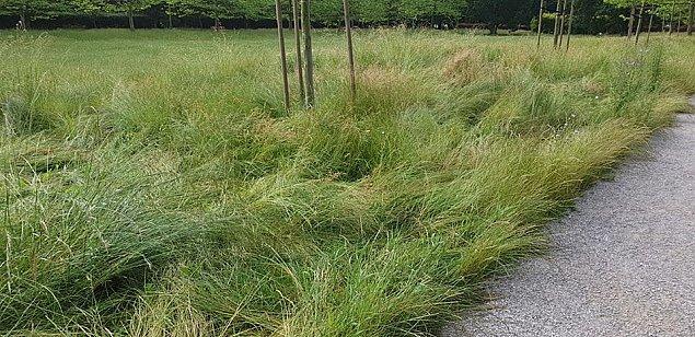 """Mieszkaniec: """"Kiedy¶ na trawie w parku mo¿na by³o usi±¶æ, teraz tylko ogl±daæ"""""""