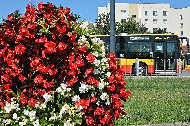 Warszawa cała w kwiatach. Tysiące roślin robią wrażenie