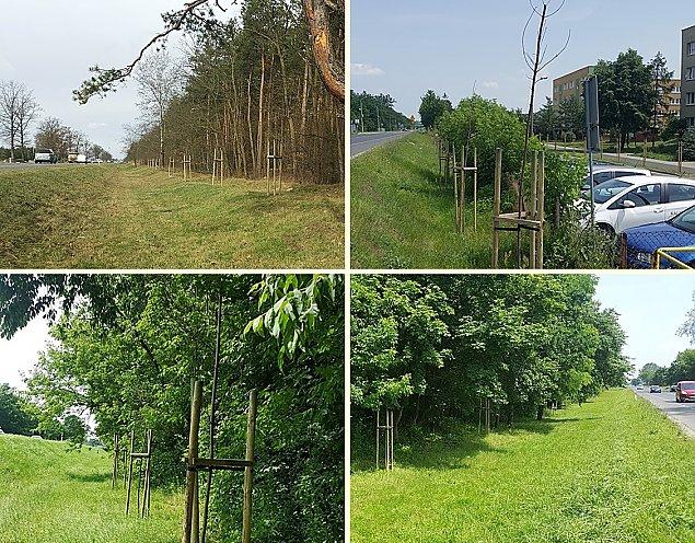 """Kilkaset drzew usch³o. """"Sadzili nie zwa¿aj±c na teren i koszty"""""""