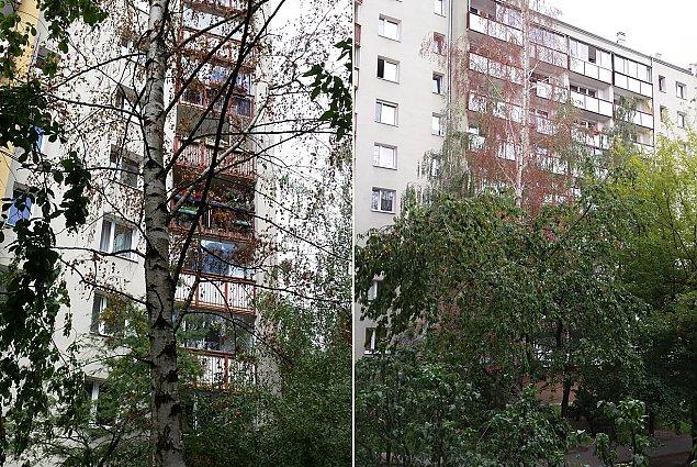 """""""Sąsiad truje drzewa"""". Mieszkańcy bezradni wobec wycinki"""