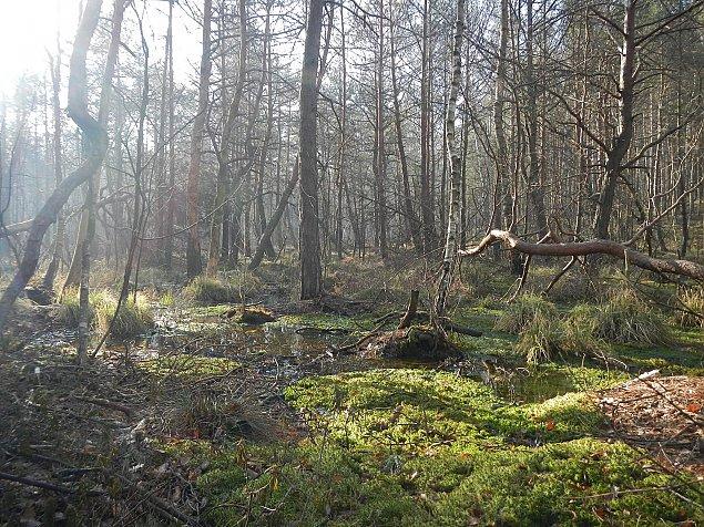 Kochasz spacery po lesie? Zostañ przewodnikiem po Mazowieckim Parku Krajobrazowym