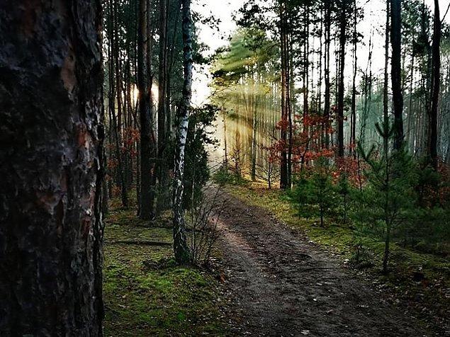 Trwa wycinka w Lesie Bródnowskim. Drzewni imigranci do usuniêcia