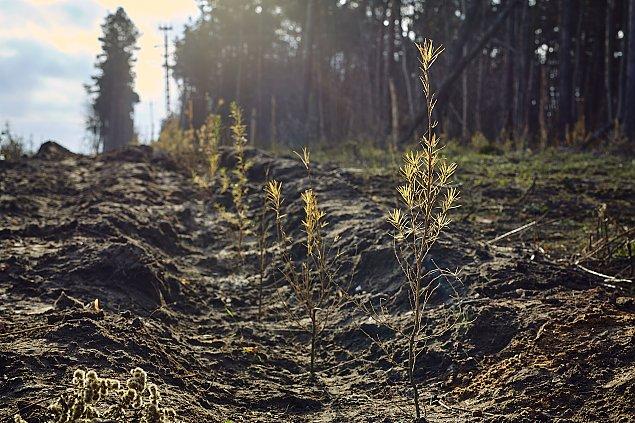 """Zasadz± na Bia³o³êce 42 tysi±ce drzew. """"Odtwarzamy zieleñ"""""""