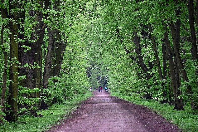 Park to las, las to Nowa Warszawa. O co chodzi na M³ocinach?