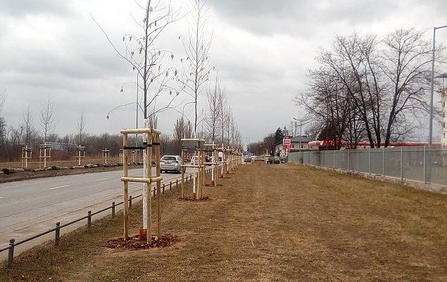 Zamiast drugiej jezdni P³ochociñskiej - szpaler drzew