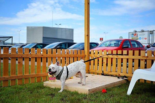 """Radny proponuje: zbudujmy """"parkingi"""" dla psów"""