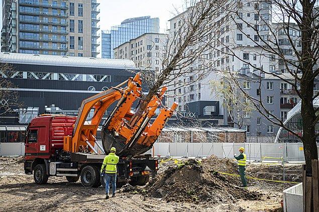 Zmiany na pl. Europejskim. Przesadzaj± 12-metrowe drzewa
