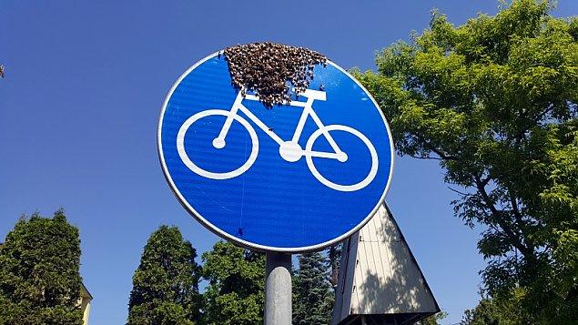 Niezwyk³a interwencja ekopatrolu na ¯eraniu. Rój pszczó³ chcia³ przesi±¶æ siê na rower?