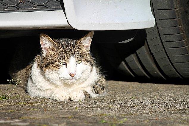 Wawrzyszew: Znale¼li pod mask± samochodu kota