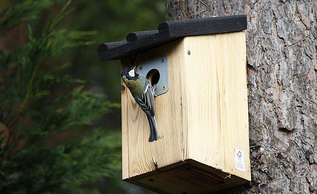 Nowe pomys³y dla Bielan: budki dla ptaków, ptasia sto³ówka, hotele dla owadów