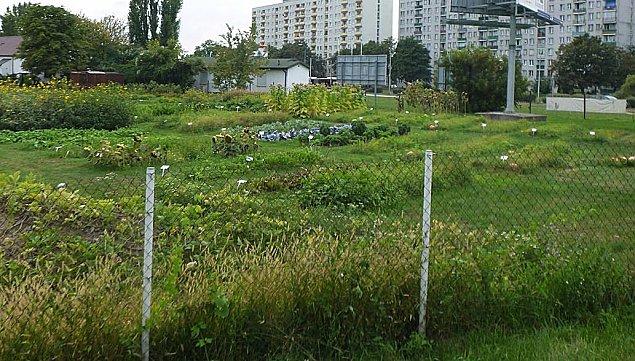 """""""Ogródek spo³eczno¶ciowy"""" w parku Górczewska. Czym bêdzie?"""