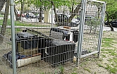 Koci domek stoi sobie na Br�dnie