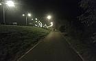 Czytelnik: stada dzik�w na Nadwi�la�skim Szlaku Rowerowym