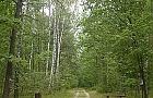 Lasek przy Lucerny - zagospodarowa� czy zostawi�?