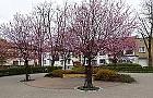 Wiosna zawita�a na dawny rynek Jelonek