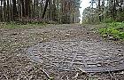 W Falenicy zbudowano kanalizacj� w... lesie