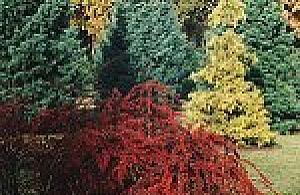 Wrzesieñ w Ogrodzie PAN w Powsinie