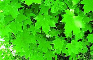 Bêdzie bardziej zielono