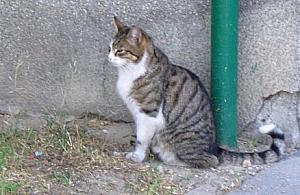 Bezdomnym kotom