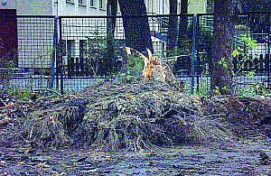 Wyci�li drzewa