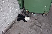 Smutna panda z Nowodwor�w