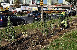 Mn�stwo nowych drzew i krzew�w na Bielanach