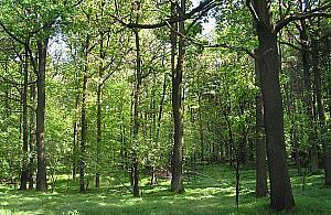 G�o�ne NIE dla wycinania lasu w Jab�onnie!